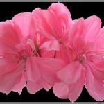 Irene Springtime