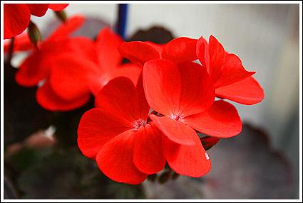 Red Black Vesuvius