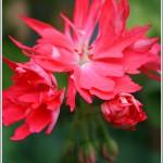 Red Dunsbury