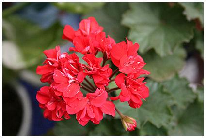 Fleurette Micro