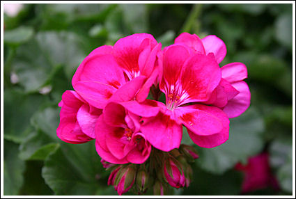 Flower Fairy Berry